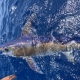 Swordfish and Tunas Landings Update | The Billfish Foundation