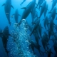 General Category Bluefin Fishery Temporary Closure | The Billfish Foundation