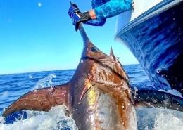 2019 Swordfish Conservation Record | The Billfish Foundation