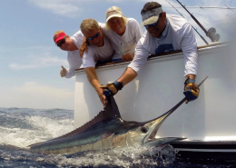 Blue Marlin Conservation Record 2019 | The Billfish Foundation
