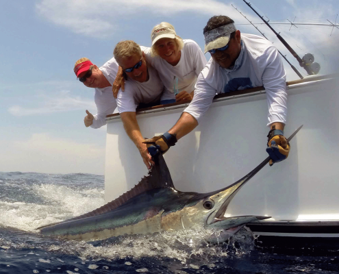 Blue Marlin Conservation Record 2019 | The Billfish Foundation