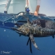 Sailfish Conservation Record 2019 | The Billfish Foundation