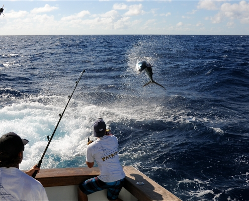 Tag & Release Competition Update | News |The Billfish Foundation