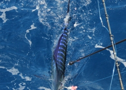 2019 Conservation Record | Featured News | The Billfish Foundation