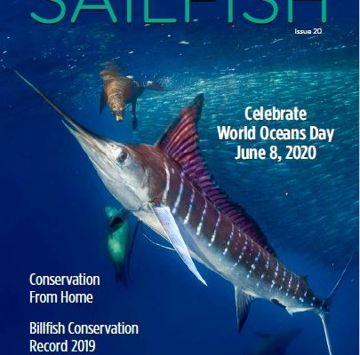 Sailfish Magazine #20 | Kids Corner | The Billfish Foundation
