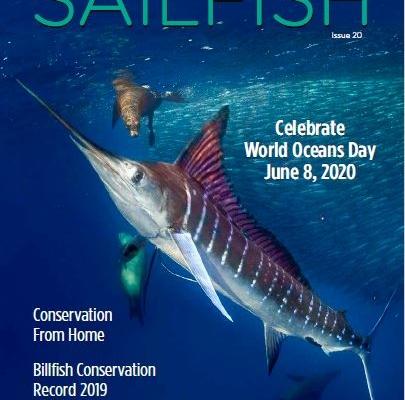 Sailfish Magazine #20 | Kids Corner | The Billfish Foundation