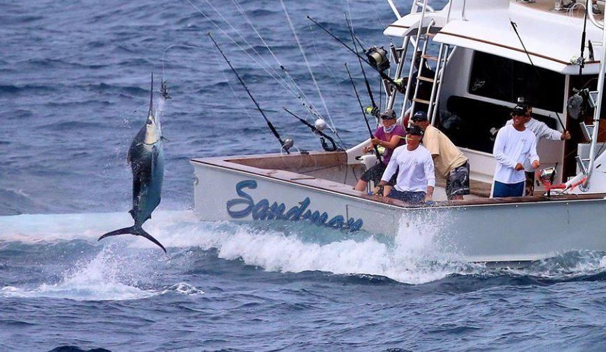 blue marlin jumping behind boat