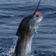 Top Taggers of the Decade   Featured News   The Billfish Foundation