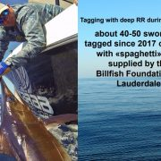 TBF Swordfish Data Represented at ICCAT Meeting | The Billfish Foundation