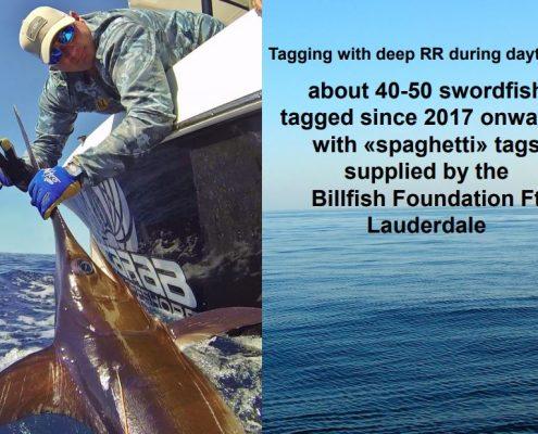 TBF Swordfish Data Represented at ICCAT Meeting | The Billfish Foundation