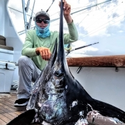 Sharks Proving Detrimental to Sailfish Survival | The Billfish Foundation