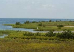 Coastal Resilience in the Gulf of Mexico and Alaska | The Billfish Foundation