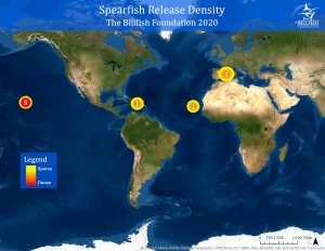 Spearfish release density map for 2020