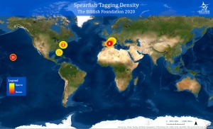 Spearfish tagging density map for 2020