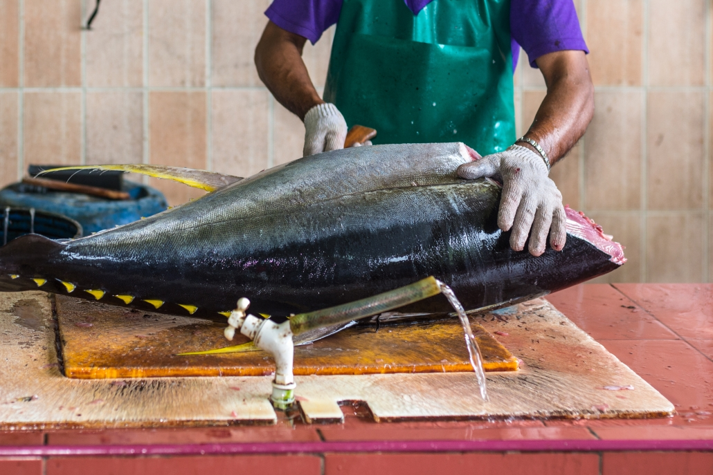 yellowfin tuna being filleted
